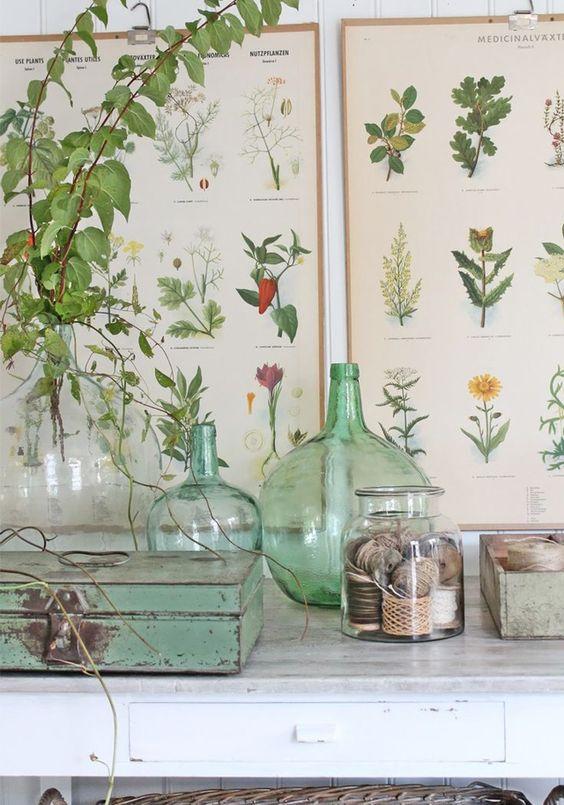 Herbier ancien et décoration vintage