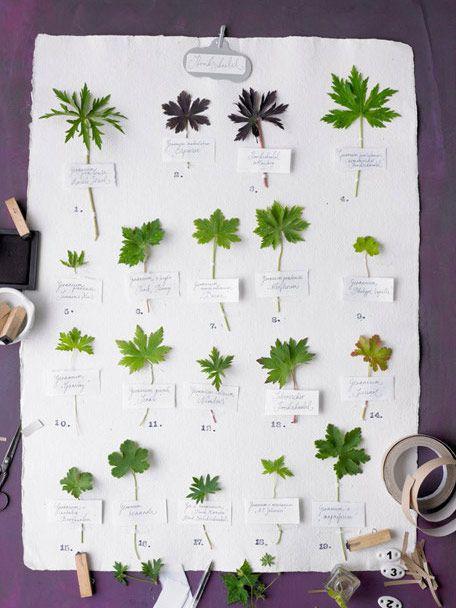 Une affiche herbier
