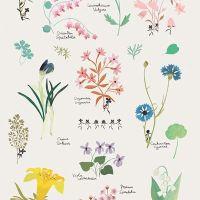 Tendance végétale : l'herbier dans la décoration