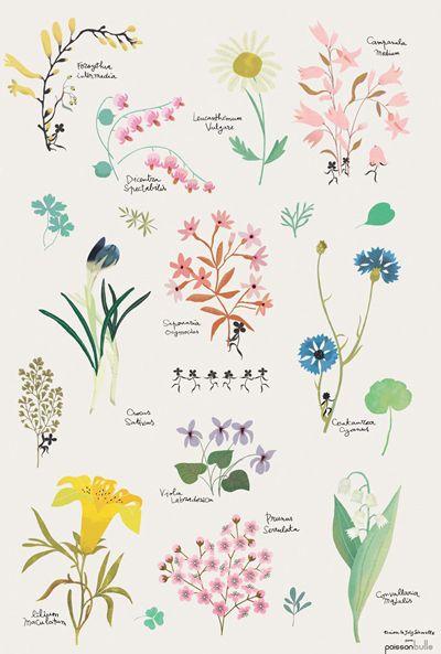 Affiche illlustrée aquarelle herbier