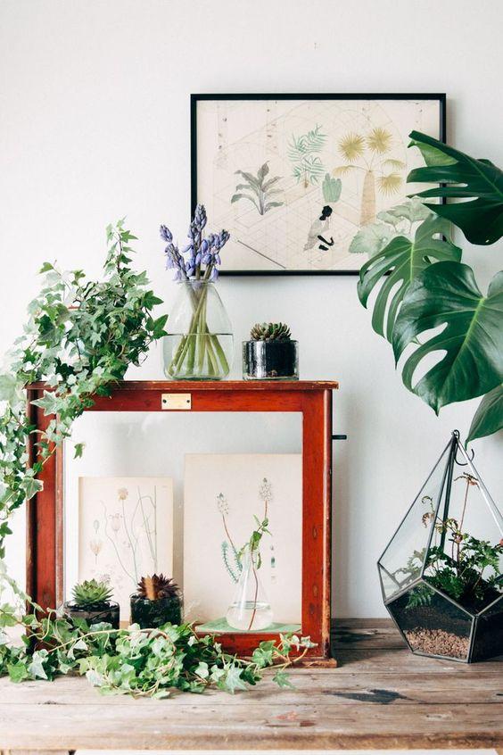 Décoration végétale planches botaniques